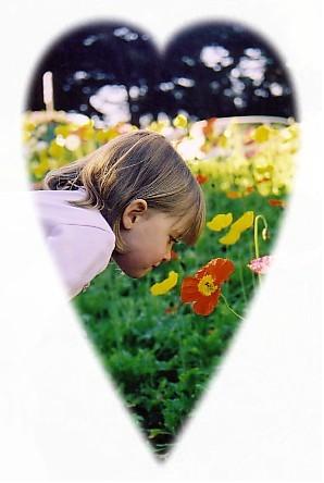 poppies 75.jpg